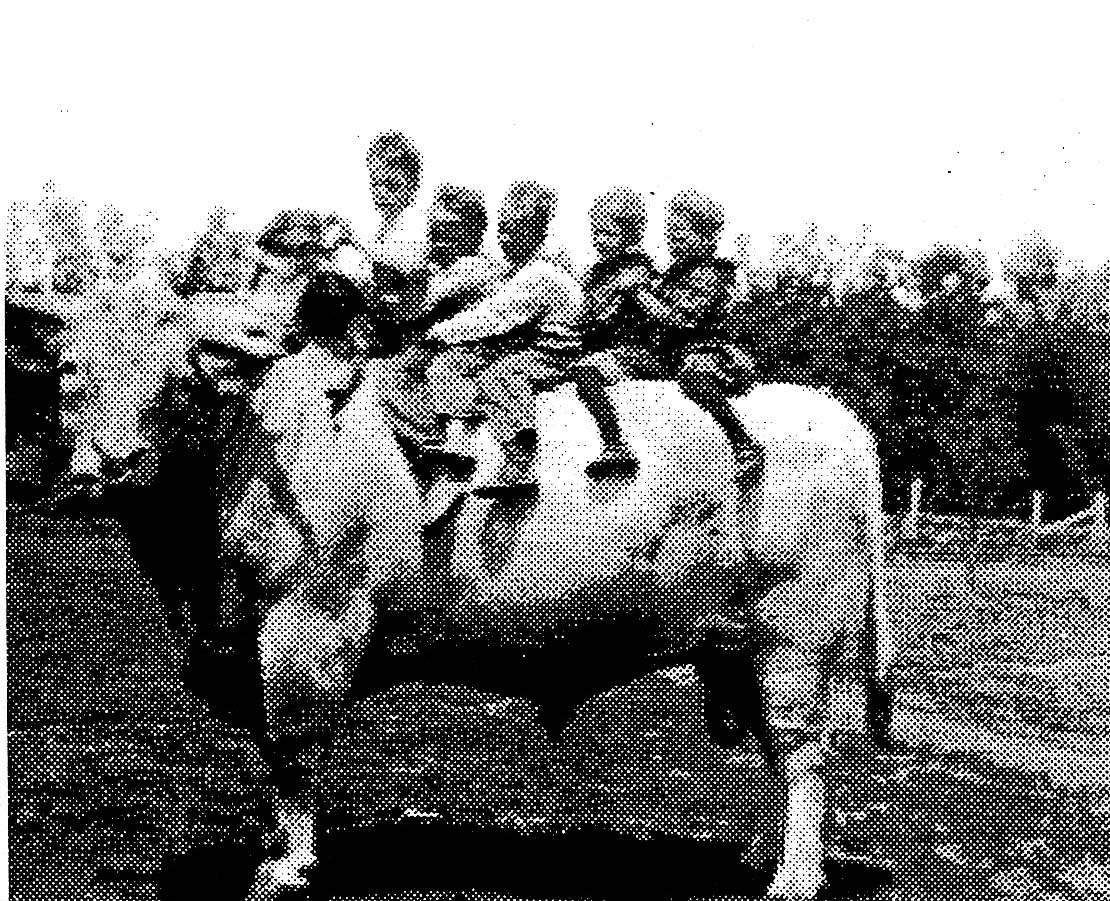 Thomas French's purebred bull, about 1910, with several of the French children on its back.