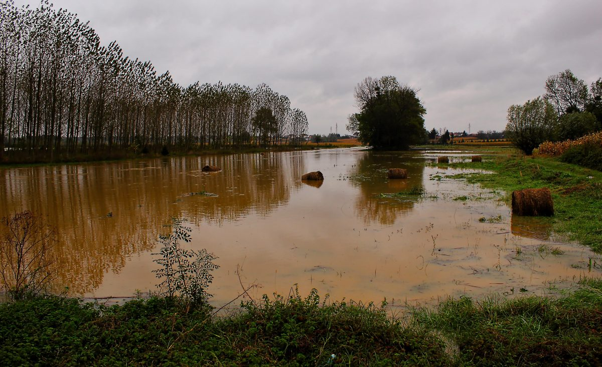Flooded Field (stock photo)