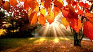 fall-sun