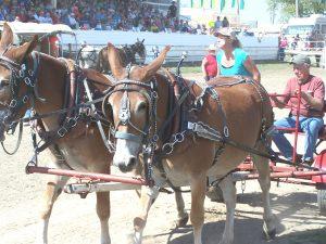 mule fest