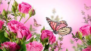 rosebutterfly tribute